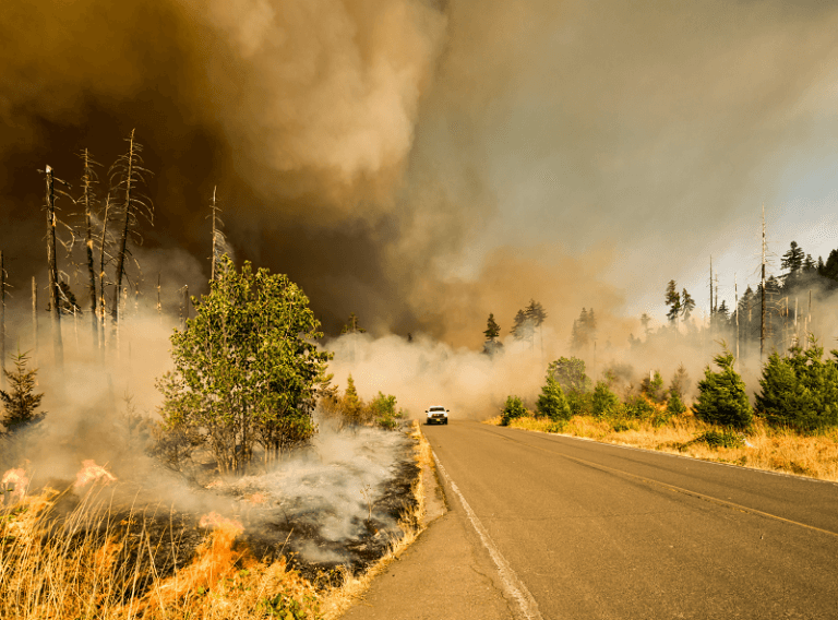 How to prevent wildfires from starting